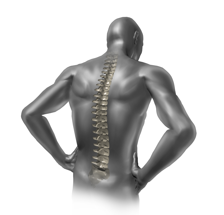 Human back spine